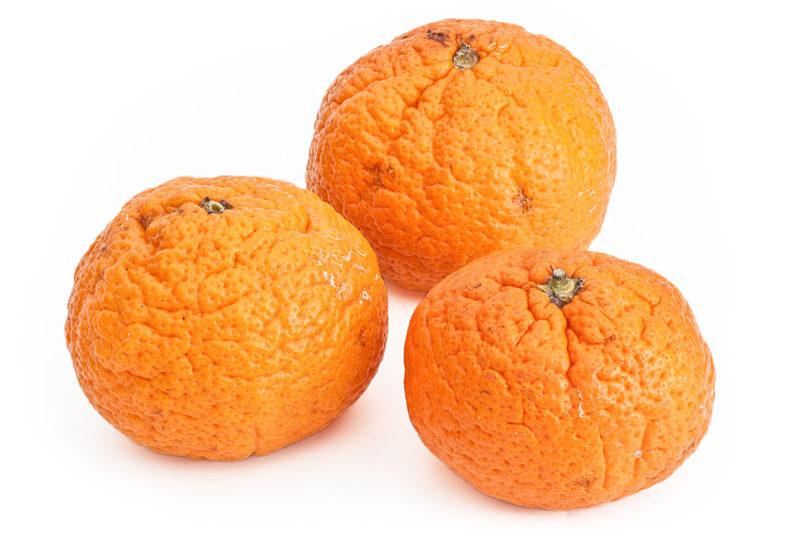 Satsuma - Citrus × aurantium